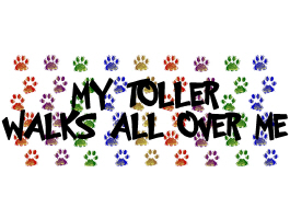 MY TOLLER WALKS ALL OVER ME
