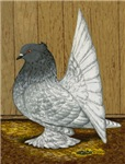 Indian Fantail Pigeon
