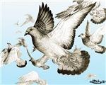 Flying Homer Pigeons