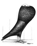 Silesian Pouter Pigeon