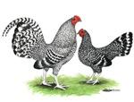 Cuckoo OE Pair
