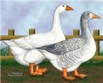 Barnyard Geese