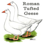Roman Tufted Geese