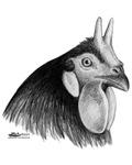 LaFleche Rooster Head