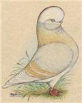 Indigo Tumbler Pigeon