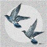 Sky Flight Pigeons