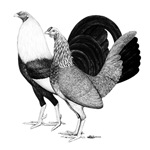American Game Poultry