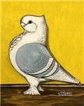 Blue Satinette Pigeon