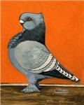 Blue Blondinette Pigeon