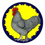 Maline Rooster