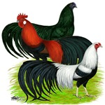 Long Tailed Roosters