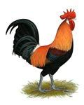 Penedesenca Rooster