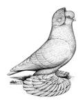Russian Tumbler Pigeon