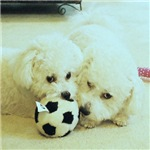SOPHIE AND MARCO SOCCER TEAM