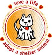 adopt a shelter animal