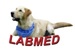 LABMED - Helping Labradors in Need