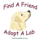 Support Labrador Retrievers - Rudy's Rescue
