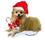 Pomperanian Christmas Design