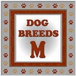 DOG BREED M