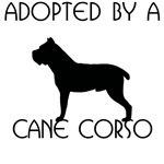 Adopted by a Cane Corso