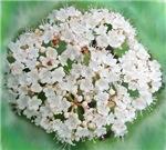 Spring Time Flower