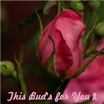 Pink Bud for You