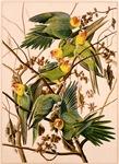 Parakeet Tree