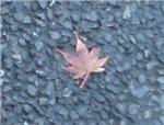 Leaf Maple?