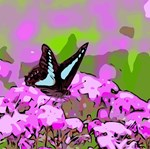 Beautiful Butterfly Abstract Floral