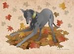 Playful Greyhound