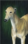 tan Greyhound