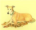 Fall Greyhound