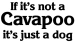 <strong>Cav</strong>apoo: If it's not