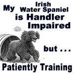 Irish Water Spaniel Agility