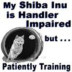 Shiba Inu Agility