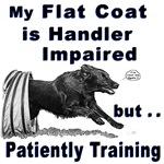 Flat Coat Agility