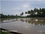 Kalaisan Rice Paddy Fields