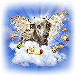 Italian Greyhound Lil' Angel Shop