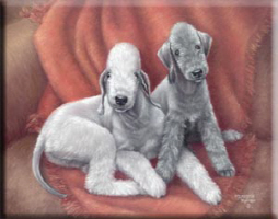 Bedlington Puppy Love