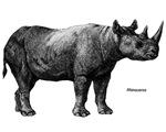 Rhino Rhinoceros
