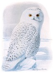Snowy Owl T-Shirt