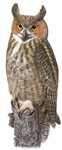 Great Horned Owl T-Shirts
