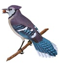 Blue Jay T-Shirts
