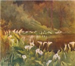 Wetland with Arum Lilies