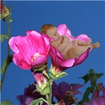 Adorable Lisianthus Flower Baby Gifts