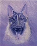 German Shepherd (Ivan)
