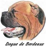Dogue de Bordeaux - 22 images *16 new PHOTOS*