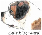 Saint Bernard - 14 images *NEW COLOR IMAGE*