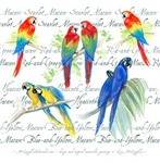 Love those Macaws!