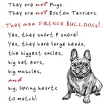 THEY are not Pugs (Smiling Frenchie)